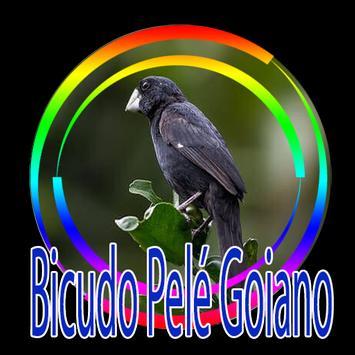 Cantos de Bicudo Pelé Goiano Regional poster