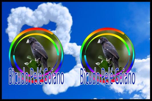 Cantos de Bicudo Pelé Goiano Regional screenshot 2