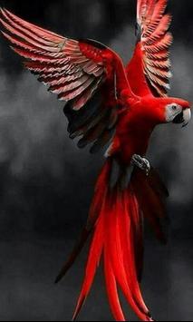 Bird HD Wallpaper apk screenshot
