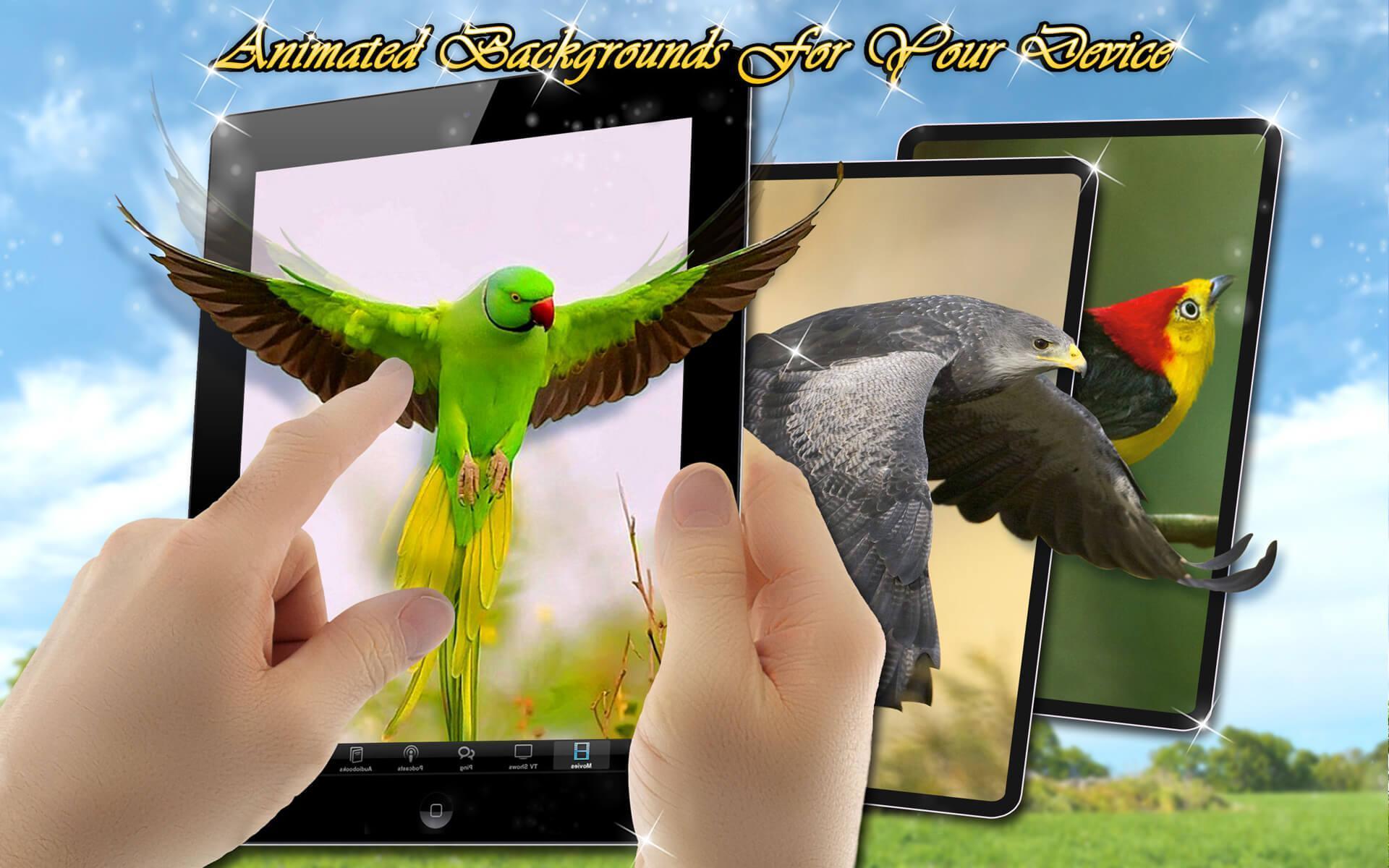 600+ Wallpaper Bagus Burung HD Terbaru