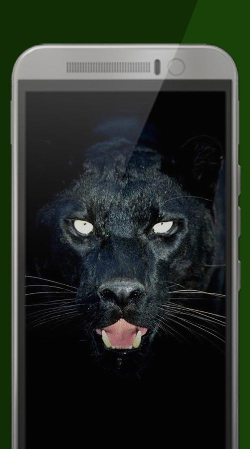 Black Jaguar Wallpaper For Android Apk Download