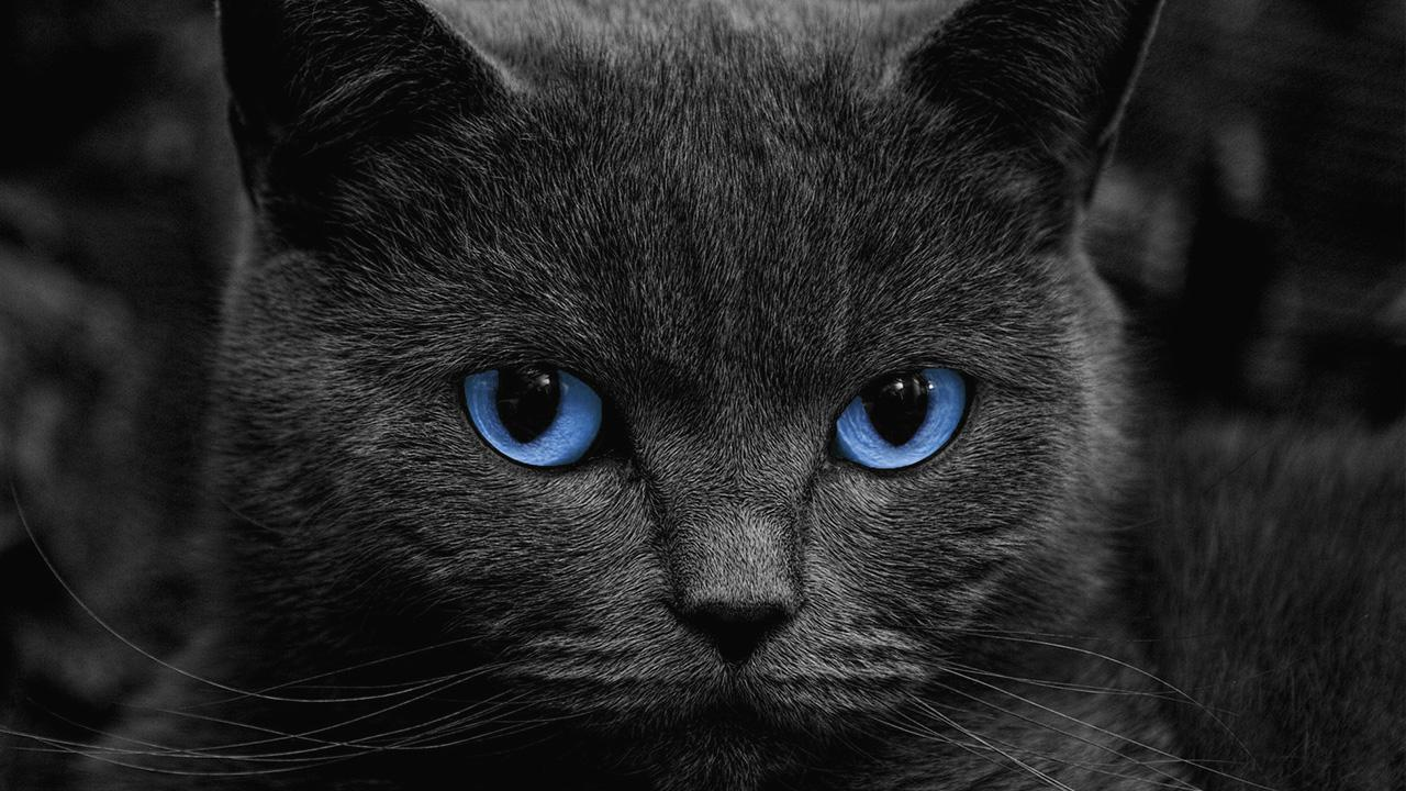 Black Cats Live Wallpaper For Android Apk Download