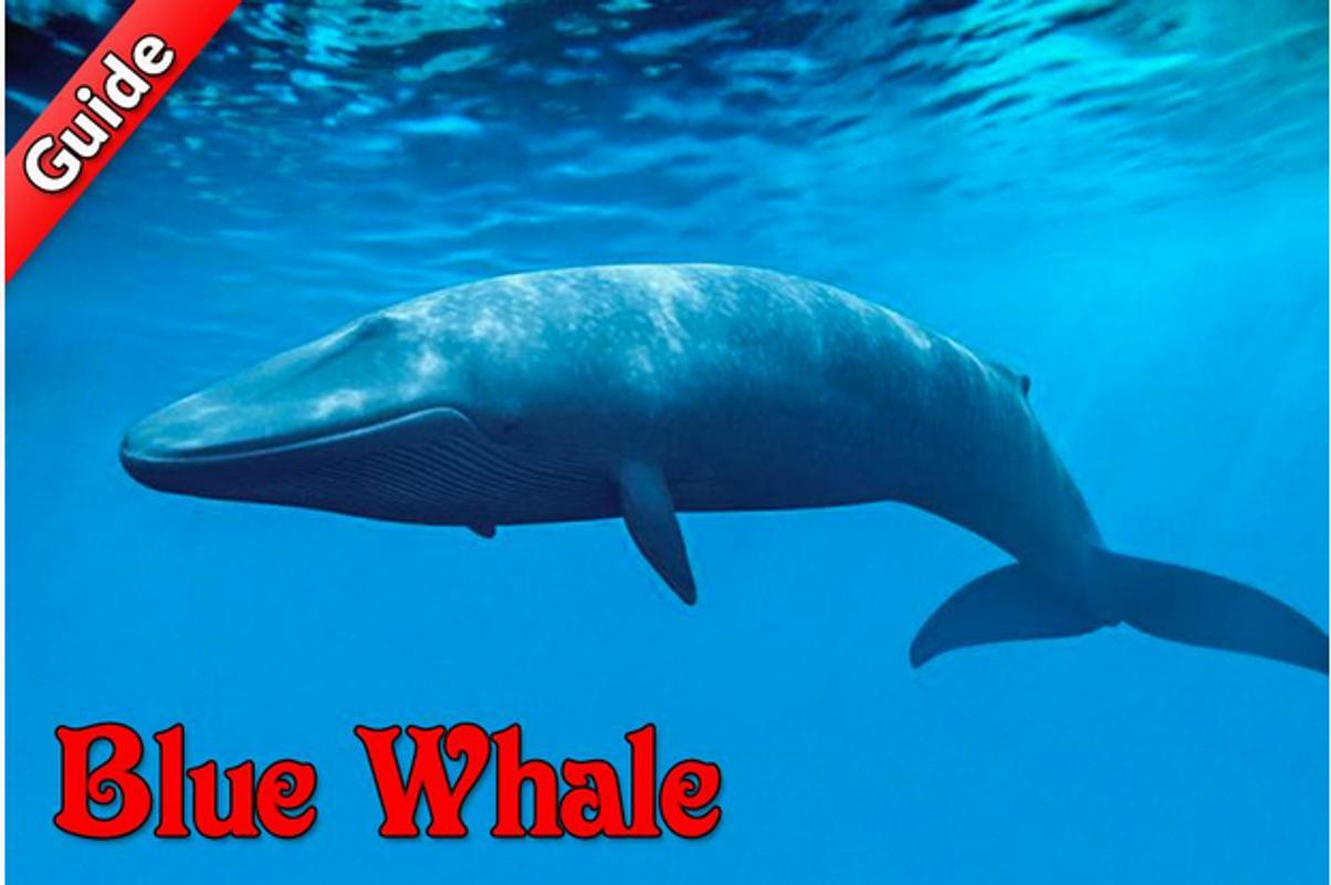 تحميل تحدي الحوت الازرق