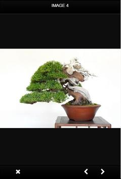 Bonsai Tree poster