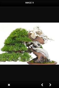 Bonsai Tree screenshot 1