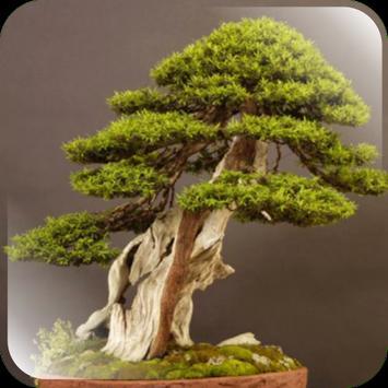 Bonsai tree garden poster