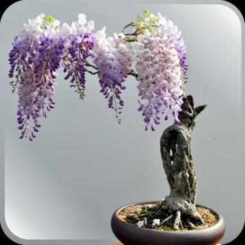 Bonsai tree garden apk screenshot