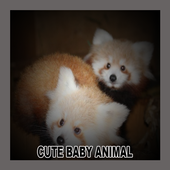 Cute Baby Animal icon