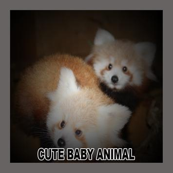 Cute Baby Animal poster