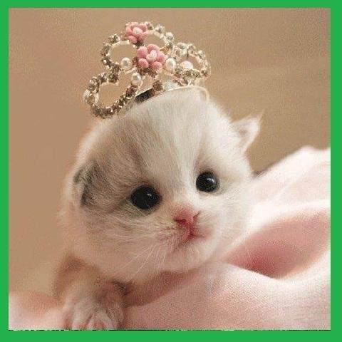 57 Gambar Binatang Purba Dan Namanya Gratis Terbaik