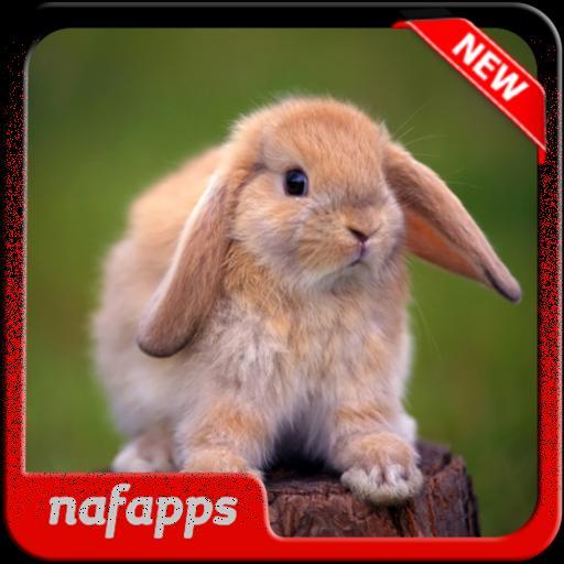 460 Koleksi Download Gambar Hewan Hewan Lucu Gratis Terbaik