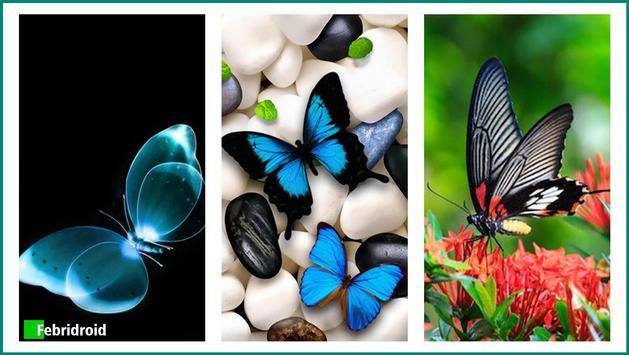 Cute Butterflies Wallpaper poster
