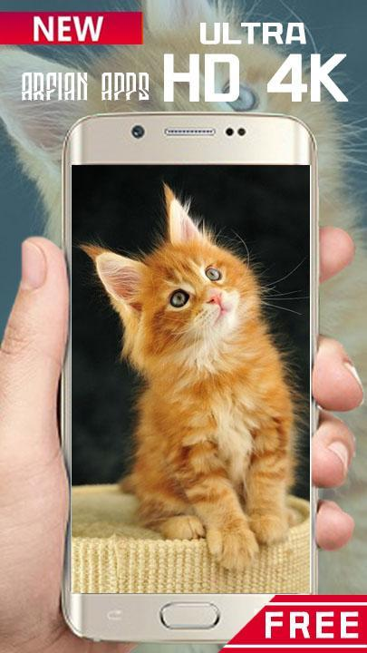 Cute Cat Hd Wallpaper 4k For Android Apk Download