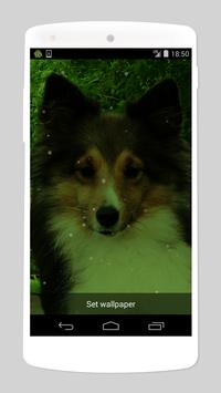 cute dog live wallpapers screenshot 1
