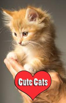 Cute Cat Wallpapers 2018 poster