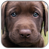 Puppies Pictures Wallpaper App icon