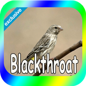 Canaries Blackthroat icon