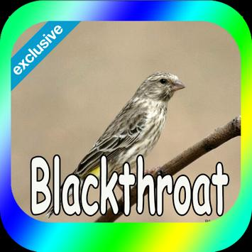 Canaries Blackthroat poster