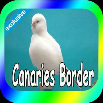 Best Canaries Roller poster