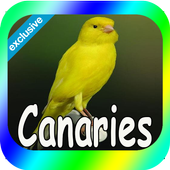 Best Canaries Singing Mp3 icon
