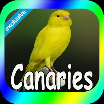 Best Canaries Singing Mp3 poster