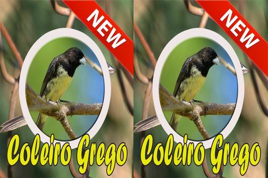 Cantos Da Coleiro Grego Complete screenshot 4
