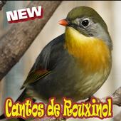 Cantos De Rouxinol Amazone Brasilo Mp3 icon