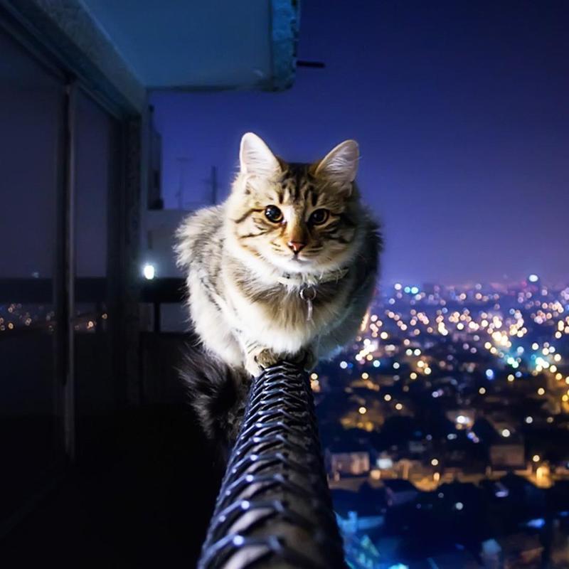 Kucing Gambar Animasi APK Download