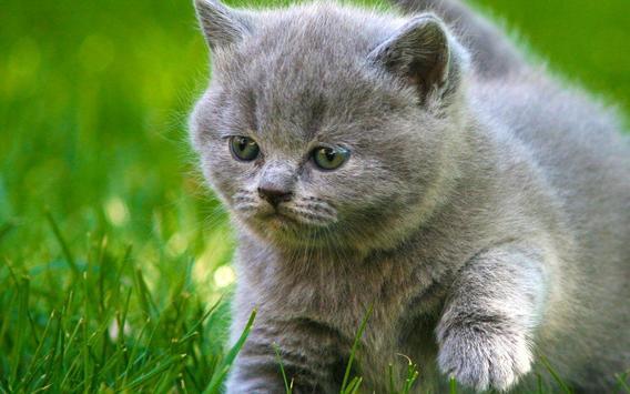 Kucing Gambar Animasi For Android