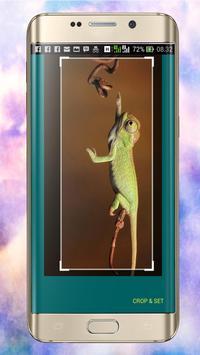Chameleon Wallpapers apk screenshot