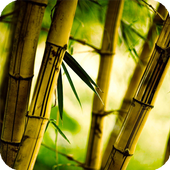 Bamboo Live Wallpaper icon