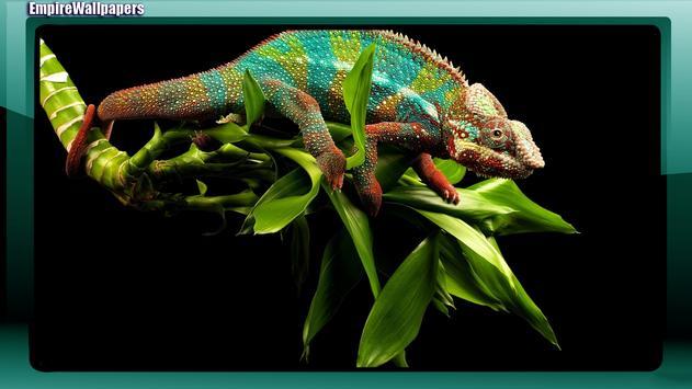 Chameleon Wallpaper poster