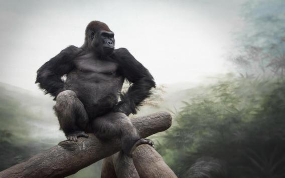 Gorilla Live Wallpaper poster