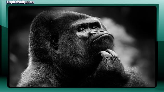 Gorilla Wallpaper apk screenshot