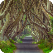 The Dark Hedges Live Wallpaper icon