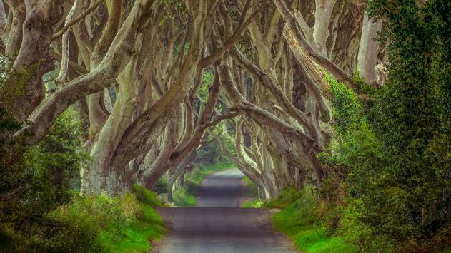The Dark Hedges Live Wallpaper poster