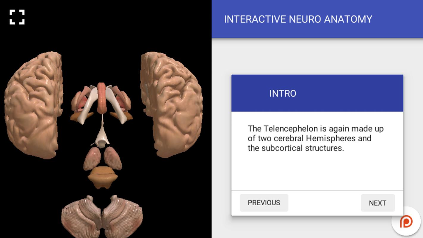 3d Brain Anatomy Interactive Choice Image - human body anatomy