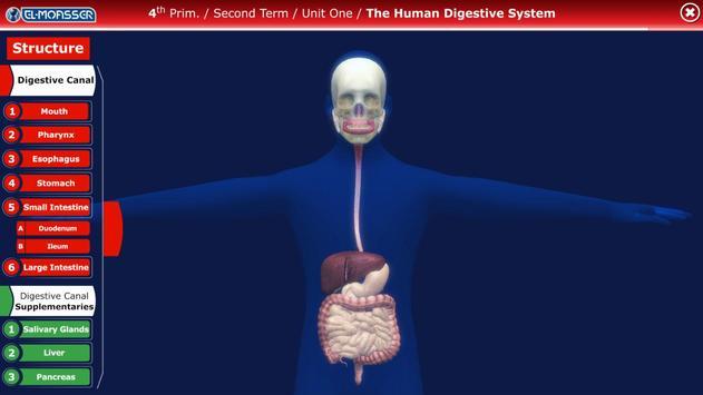 El-Moasser Digestive System 3D poster
