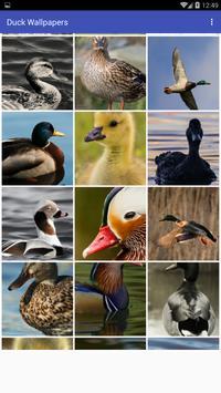 Duck Wallpapers screenshot 1