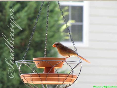 DIY Bird Feeder Design Ideas स्क्रीनशॉट 8