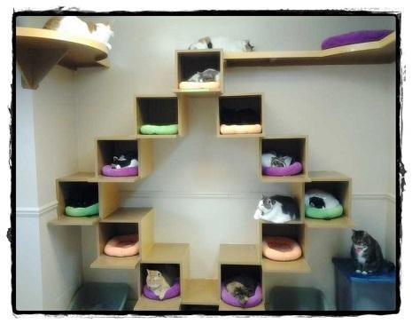 Swell Diy Cat Shelves For Android Apk Download Interior Design Ideas Tzicisoteloinfo