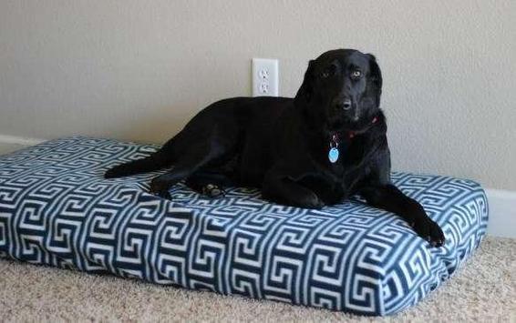 DIY Dog Bed Design Ideas screenshot 4