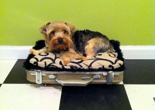 DIY Dog Bed Design Ideas screenshot 3