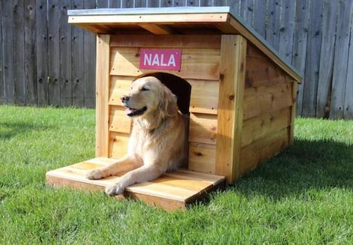 DIY Dog House apk screenshot
