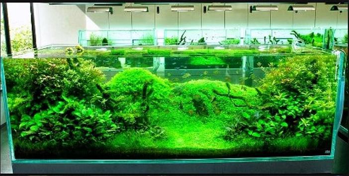 Decorating Ideas Aquarium apk screenshot