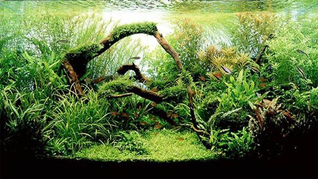 Design Aquarium Aquascape apk screenshot