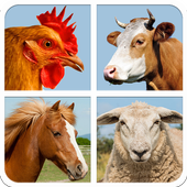 Farm Animal Sounds And Guess icon