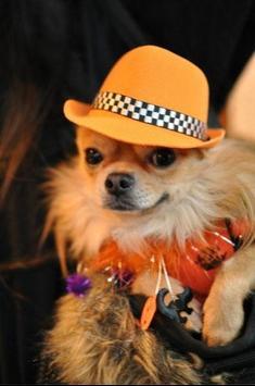 Dog Fashion Design Idea poster