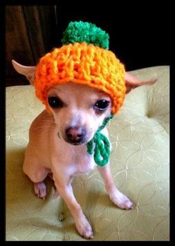 Dog Fashion Design Idea apk screenshot