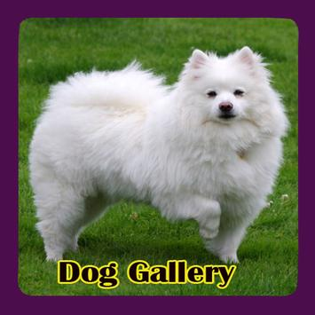 Dog Gallery poster